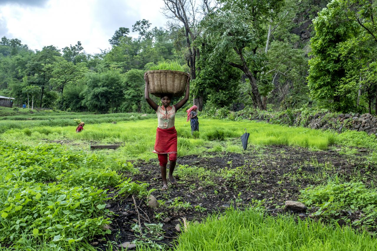 <p>Women in Sankdi village, in India\'s Narmada District, work in their communally managed village field. Photo by Panos Pictures/Food and Land Use Coalition.</p>